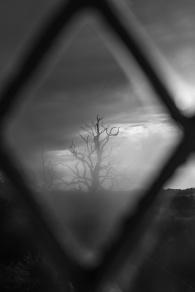 Lone, dead tree in storm